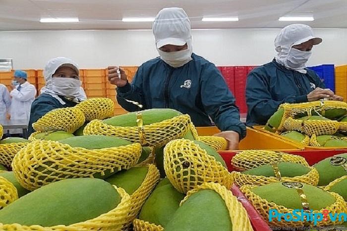 Để xuất khẩu thì xoài Việt Nam phải đạt những tiêu chuẩn nào?