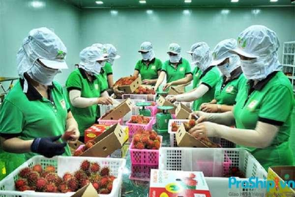 Tiêu chuẩn xuất khẩu chôm chôm sang thị trường các nước hiện nay