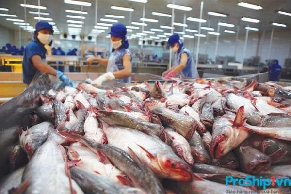 Cá tra xuất khẩu sang Trung Quốc phải đáp ứng tiêu chuẩn gì?