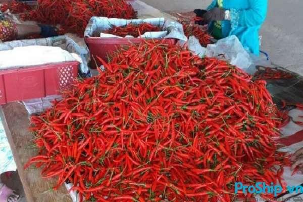 Tiêu chuẩn, quy định xuất khẩu ớt sang Trung Quốc như thế nào?
