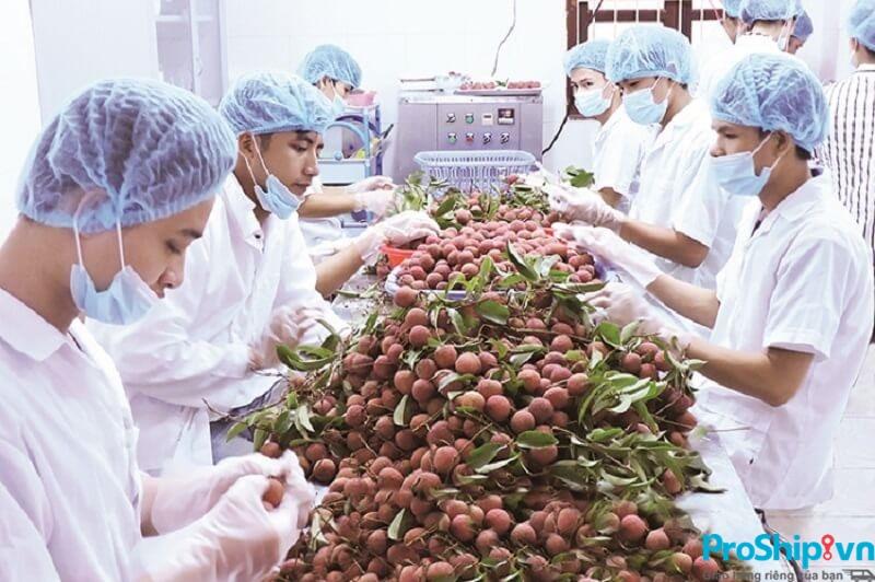 Tiêu chuẩn xuất khẩu quả vải tươi sang các thị trường các nước hiện nay
