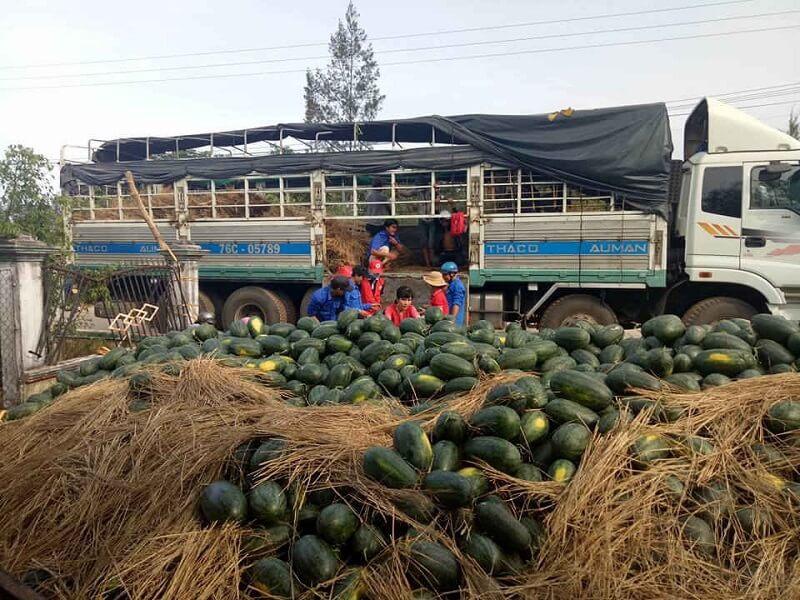 Vận chuyển nông sản sang Trung Quốc bằng container lạnh tự hành đường sắt