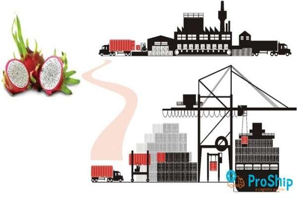 Dịch vụ vận chuyển Thanh Long bằng Container Lạnh giá rẻ