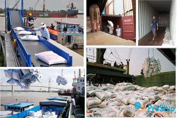 Dịch vụ vận chuyển Gạo bằng Container giá thành cạnh tranh